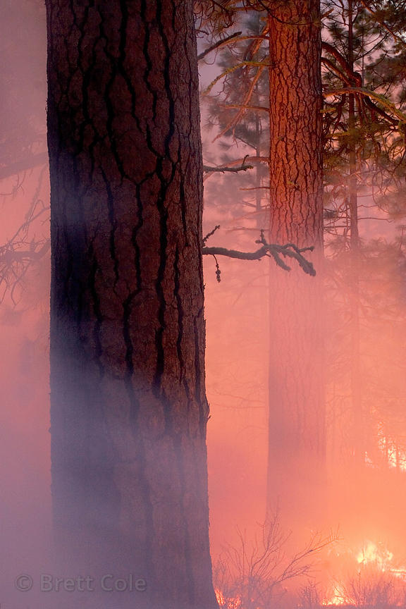 Prescribed burn near Black Butte Ranch in the Deschutes National Forest, Oregon