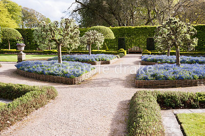 The Summer Garden is surrounded by hornbeam hedges and features clipped box, hurdle beds full of forget me nots and pollarded...