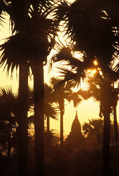 Palm trees and pagoda