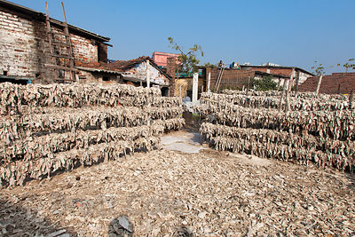 A slum area in Ward 65, Chamrapatti, Kolkata, India. Leather tanning for handbags and purses is the main activity in the comm...