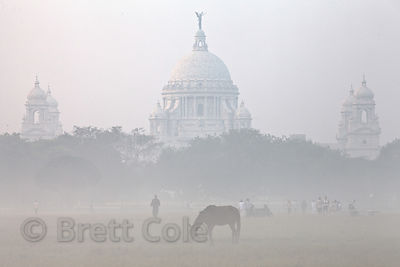 A horse grazes, with Victoria Memorial in the background. on a foggy morning on the Maidan, a large park in central Kolkata, ...