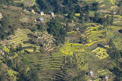 Aerial view of terraced fields and houses, Himalayan foothills, Nepal, November 2007