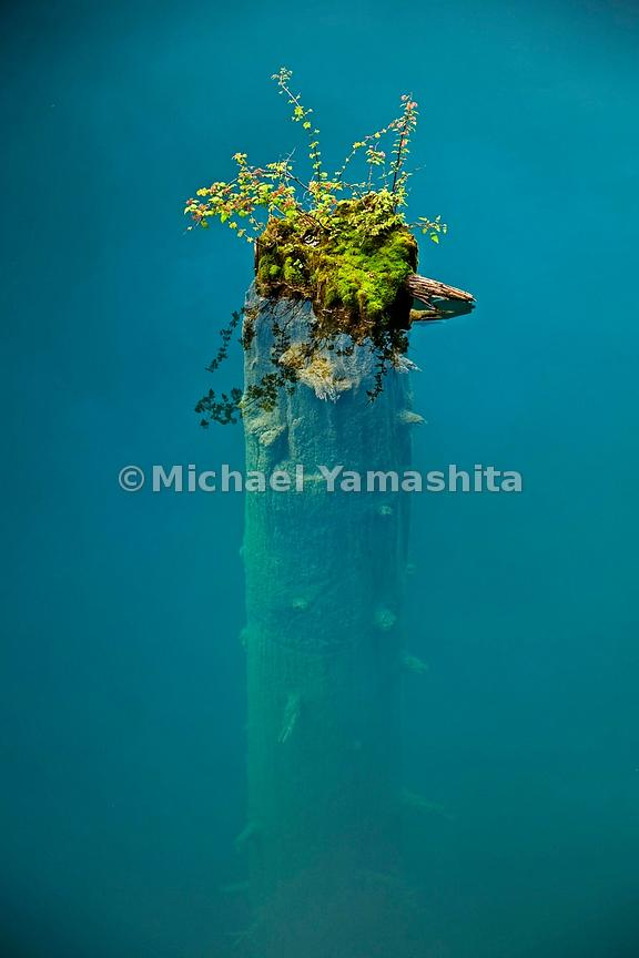 A haphazard flourish of hardy plants caps a broken tree trunk submerged in Panda Lake.