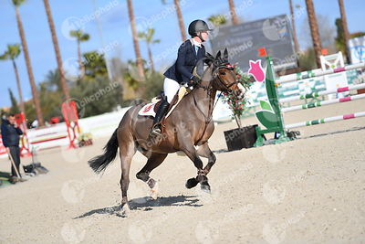 Oliva, Spain - 2018 January 27: Gold tour 1m30 during CSI Mediterranean Equestrian Tour 1..(photo: 1clicphoto.com I Nicole Ci...