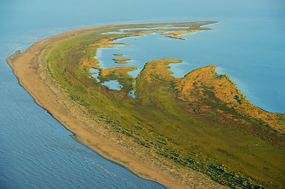 Aerial view over the Danube delta rewilding area, Romania, June 2012