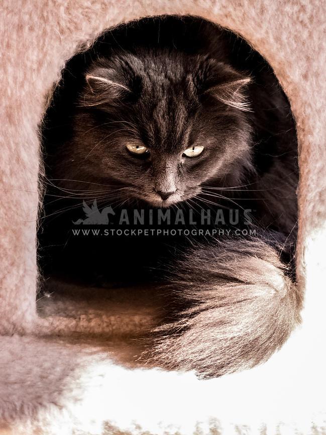 Fantastic Animalhaus Media Cat Hiding In Cat Tree House Download Free Architecture Designs Scobabritishbridgeorg