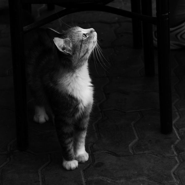Chat de Marrakech