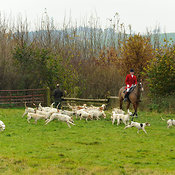 The Cottesmore Hunt at Dene Bank Farm 3/12