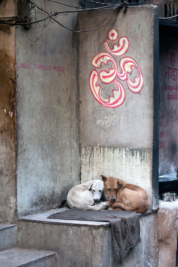Dogs resting in the warmth of an alley full of sweets shops and ovens, Pushkar, Rajasthan, India