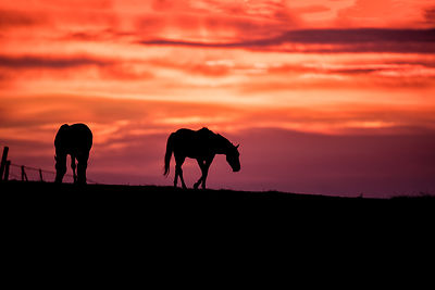 Sunrise with Horses