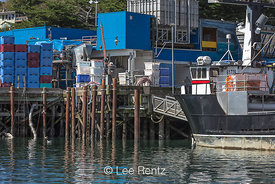 Fishing Industry Waterfront of Newport, Oregon