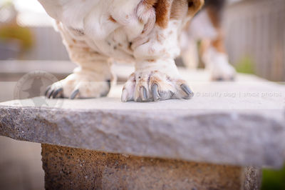 closeup of basset hound dog paws perched on stone wall