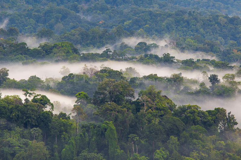 Lowland rainforest with hanging mist at dawn, Osa Peninsula, Costa Rica.