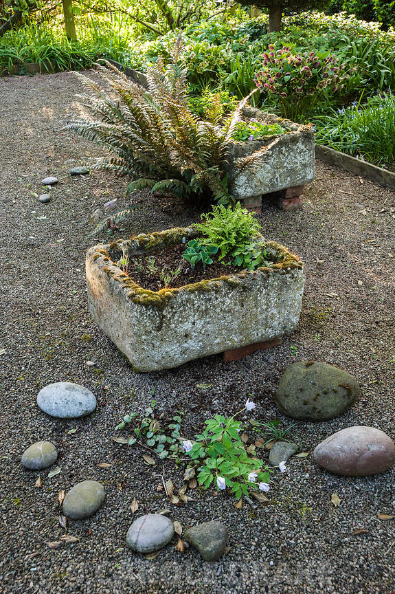 Tufa containers in the shade garden at the front of the house feature choice ferns and alpines including Woodsia alpina, W. i...