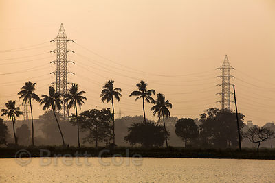 Palm trees and electrical towers mix near the town of Bantala, in the East Kolkata wetlands, Kolkata, India.
