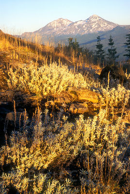 Mountain Sage on the summit of Horsepasture Mountain at sunset, with Three Sisters in the background, Oregon Cascades.