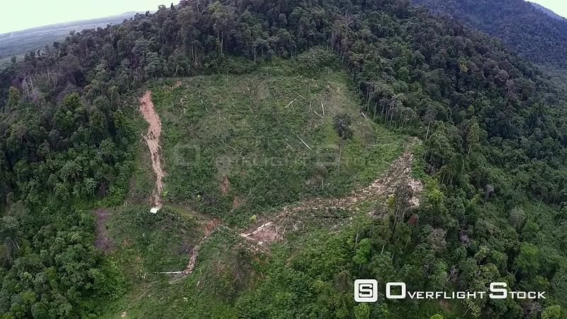 Aerial view of rainforest, showing forest clearance and start of erosion gully on hillside, Suaq Balimbing, Kluet Swamps, Sum...