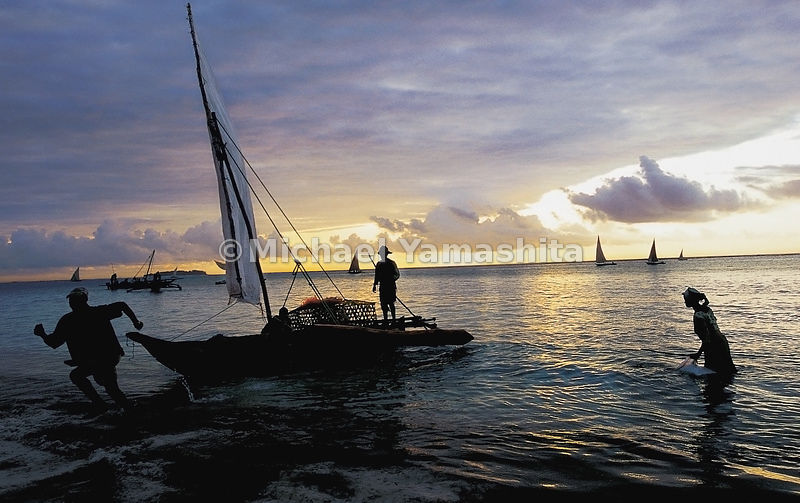 At daybreak along the northeast coast of Zanzibar, Tanzania, fishing dhows head out from Matemwe for the open sea.
