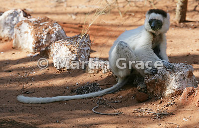 Madagascar photos