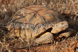 tortoise_stretching_neck