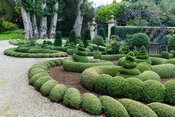Clipped box and yew in the Parterre Garden with standard laurel and trained pyracantha on the wall behind. Gates and gazebo b...