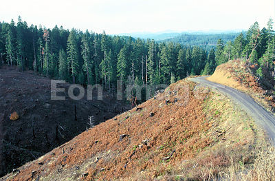 Clear-cut area in Spotted Owl habitat