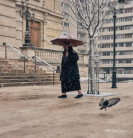 07-02-18_colombes_neige_flocon_mairie_dame_parapluie_pigeon_JPEG_Qualité_maximum