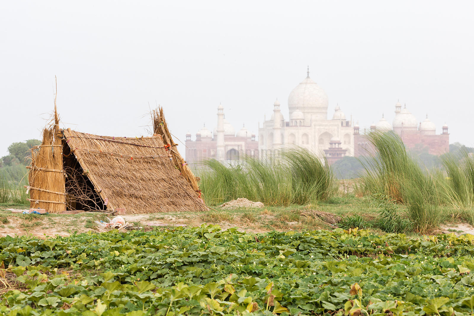 Pumpkin Field, Thatch Hut & Taj Mahal