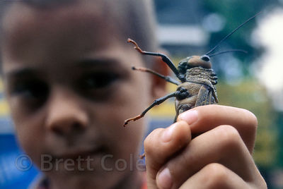 A young boy holds a giant grasshopper up to the camera. CoopeSilencio, near Savegre, Costa Rica