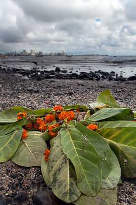 Leaves and marigold left behind from a religious ceremony on Chowpatty Beach, Mumbai, India.