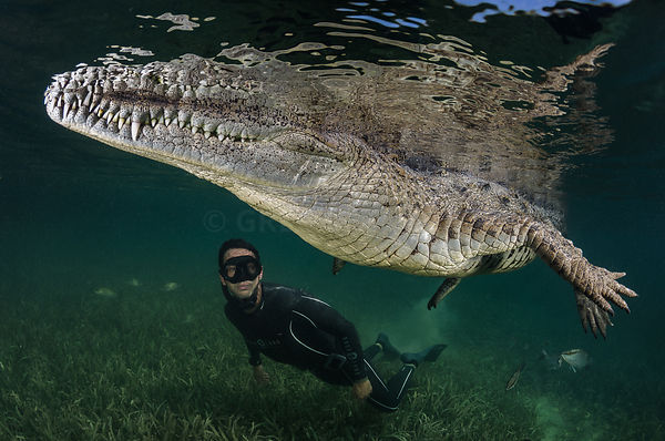 Freediver Pierre Frolla swimming with crocodiles and sharks