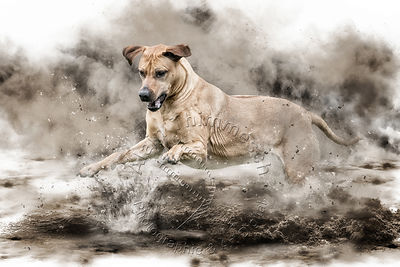 Art-Digital-Alain-Thimmesch-Chien-645