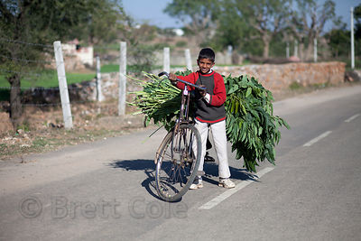 A boy transports goat fodder by bicycle in the rural village of Kharekhari, Rajasthan, India