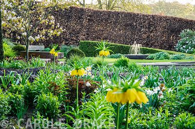 Bed in the Canal Garden is full of crown imperials, Fritillaria imperialis, narcissi and pulmonarias, with water feature glim...