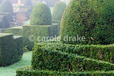 Clipped box and yew in the Fountain Court at Mapperton, Dorset