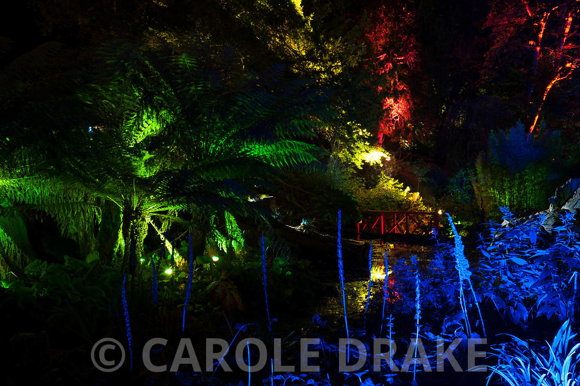 Tree ferns illuminated with green lights are surrounded by blues, reds and yellows at Abbotsbury Subtropical Gardens in October