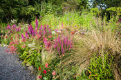 Bed near the house with Astilbe chinensis var. taquetii 'Purpurlanze', lythrum, grasses, dahlias, Verbena bonariensis and Fil...