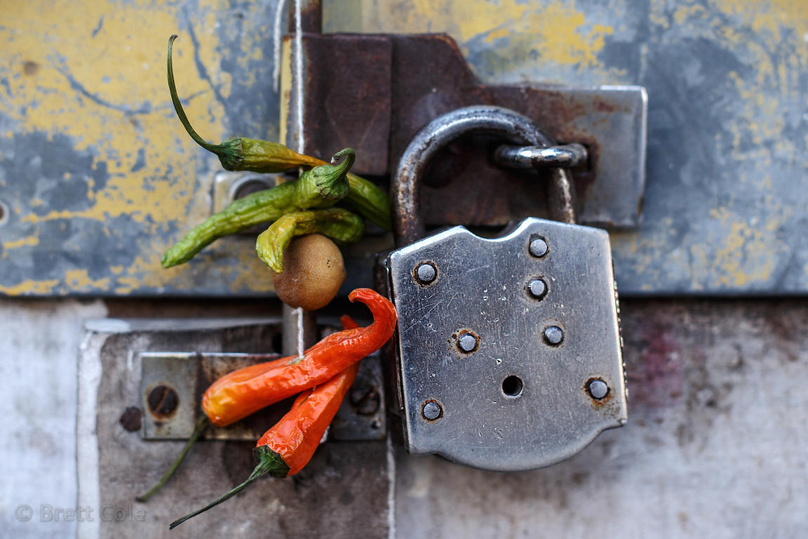 Lemons and chili peppers hang in front of a shop in Pushkar, Rajasthan, India. It's a good luck charm. Lemons are widely used...