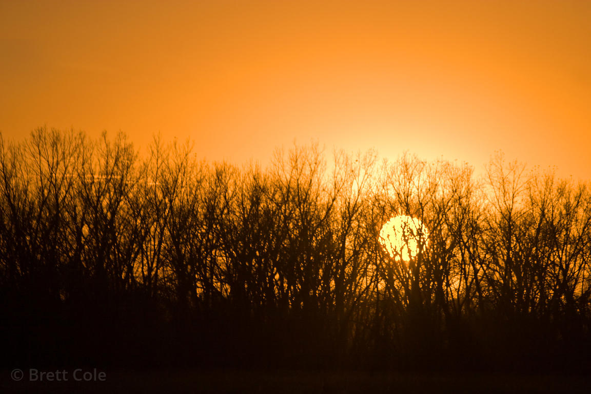 Sunset behind forest, Platte River, Nebraska