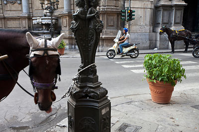 Italy - Palermo - Horses used to ferry tourists and a scooter rider at the Quatro Canti (officially known as Piazza Vigliena)...