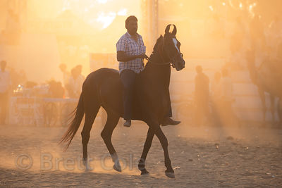 Horse in golden light at the Pushkar Camel Fair, Pushkar, Rajasthan, India