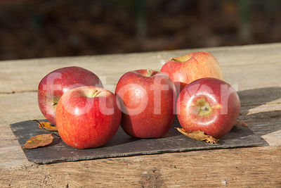 Malus domestica 'Mariri Red', pomme, rouge