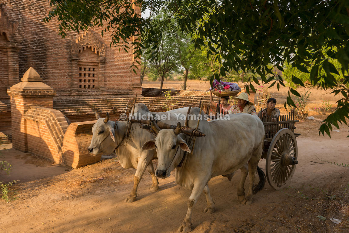 Oxen pull a family aboard a wooden cart in Bagan. Ox carts and horse carts are both common modes of transport in the ancient ...