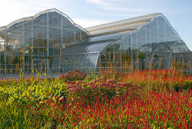 Planting of perennials and grasses, designed by Tom Stuart Smith in front of the glasshouse at RHS Gardens Wisley. © Rob Whit...