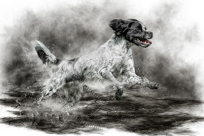 Art-Digital-Alain-Thimmesch-Chien-635