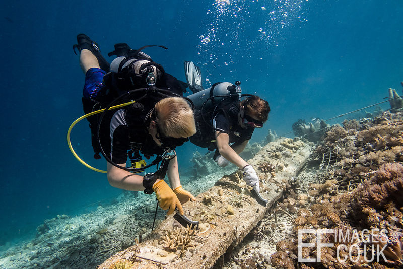 TRACC Volunteers Artu and Razmus maintain and artificial reef by scrubbing it clean of algae to reduce competition for the co...