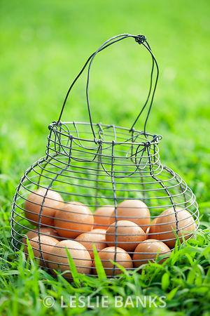 Organic brown eggs in vintage basket