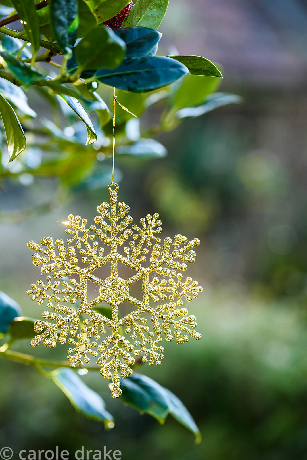 Christmas decorations in the shape of snowflakes hanging from the branches of a standard holly