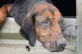 highmoor_n_bloodhounds_23_12_18_0002