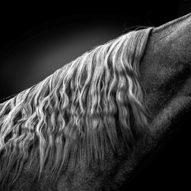 Fine Art photos chevaux